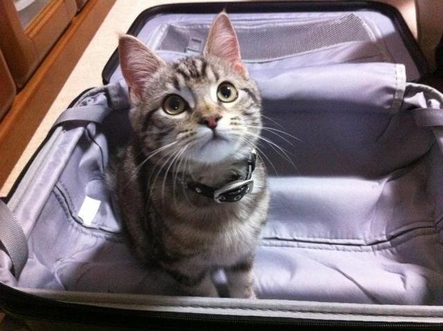 旅の荷物の片付けは速攻で!風水マスターが教えてくれたガラクタとは!?