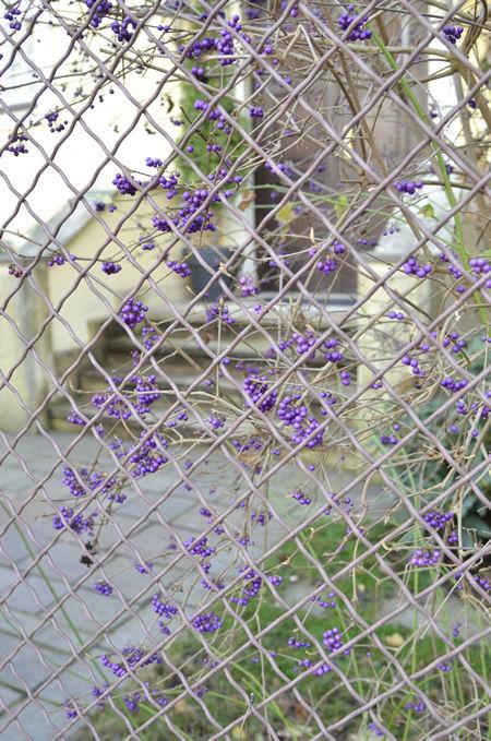 ms_purple.fruits_2