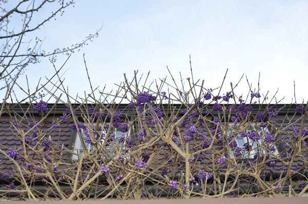 ms_purple.fruits_5