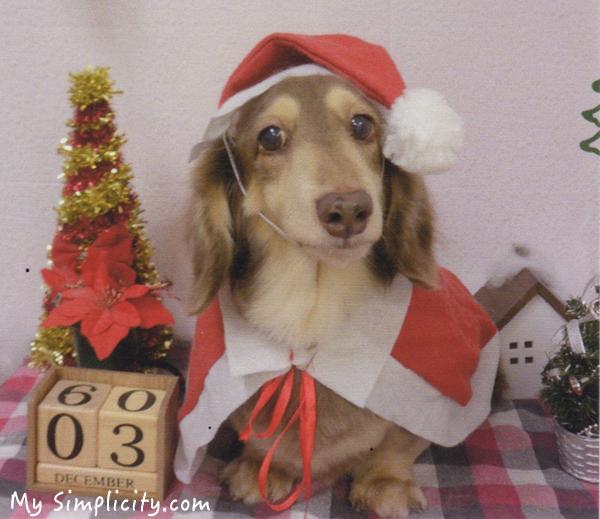 ミニマリスト家のクリスマス★ワンちゃんのサンタ姿だけで終わり!?実は結婚記念日なのです