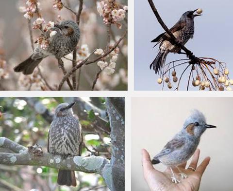 ms_bird_hiyodori