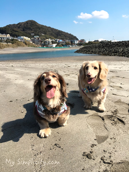 ms_dogroom_beach