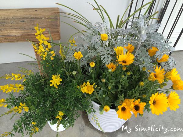 ms_yellowflowers